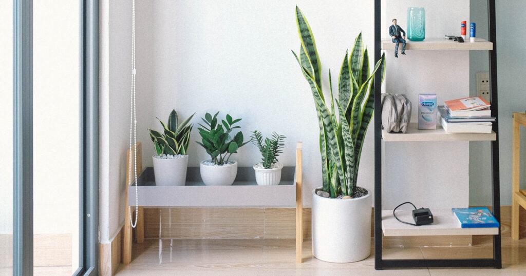 観葉植物の植え替えのタイミング
