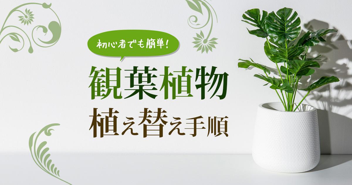 【初心者でも簡単】観葉植物の植え替えの手順